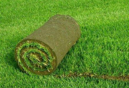 Газон в рулонах — для удобства садоводов