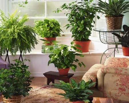 Как устроить автополив растений