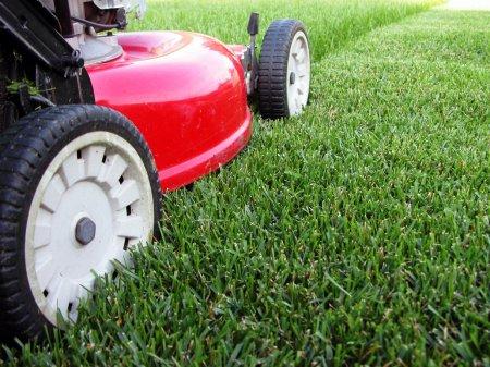Какая садовая техника необходима для ухода за газоном