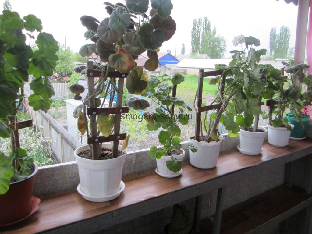 Опора для растений своими руками фото